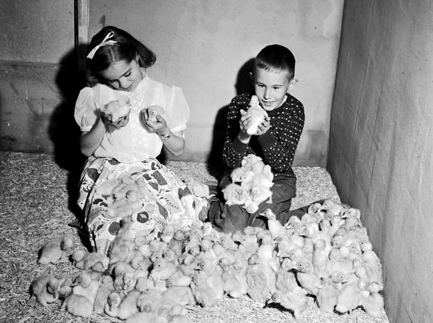 קינדער אויף אַ קאַטשקע־פֿאַרם אין לאָנג־אײַלאַנד שפּילן זיך מיט קאַטשקעלעך, 1955